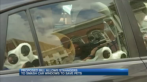 [NECN] Proposed Bill Allows People to Smash Car Windows to Save Pets