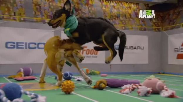 [NATL]Recap From This Year's Adorable Puppy Bowl