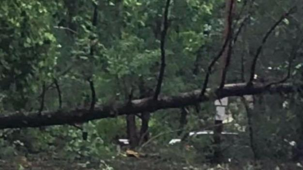 2 Friends on Phone With Each Other Escape Falling Trees in Storm