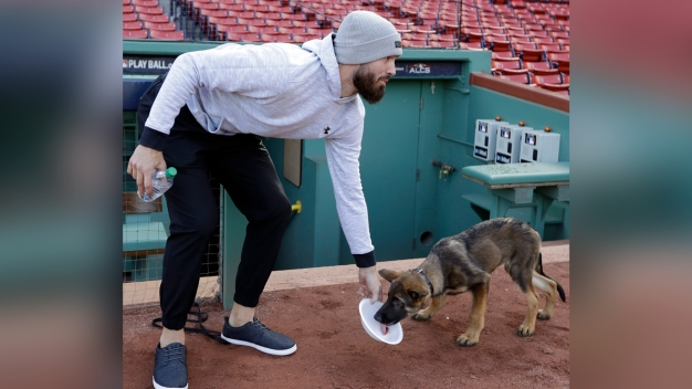World Series Bark Park: Porcello's Pup Romps Around Fenway