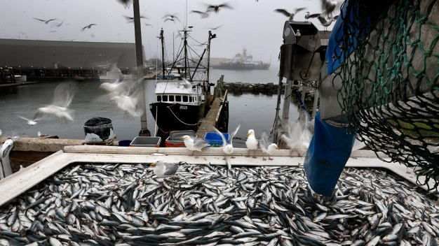 Changes About Small Fish in Store for New England Fishermen