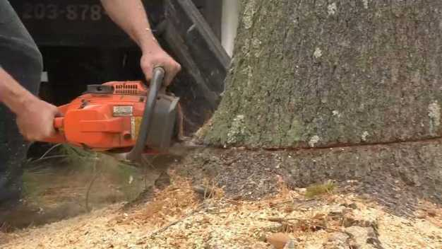 Money Saving Monday: Tree Trimming and Removal