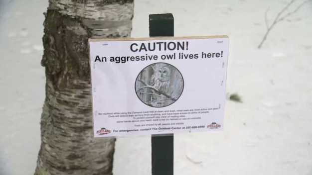 'Get Out of Here!': Aggressive Owl Attacks Man Skiing