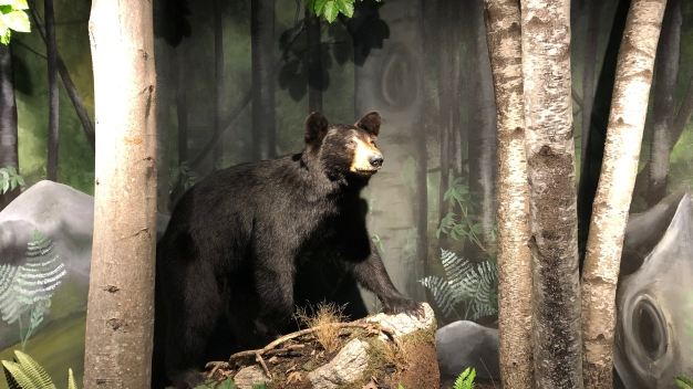Wheelchair-Bound Woman Attacked by Bear in Her Home