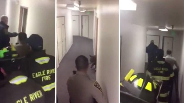 Small Bear Raids Fridge in Colorado Apartment