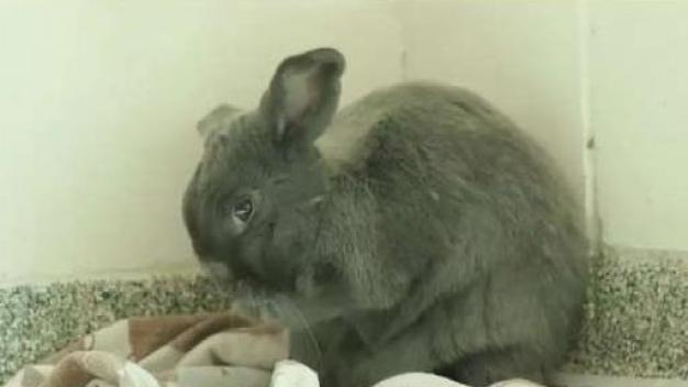 Clear the Shelters: MSPCA Angell