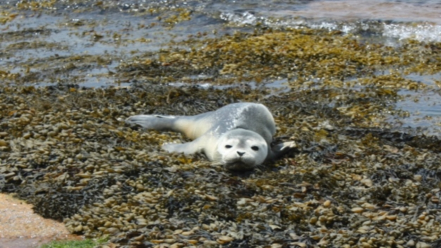 Public Asked to Keep Away From Seal Pups