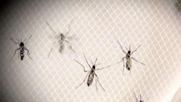 Latest Tests Find 1 New Detection of Mosquito Disease