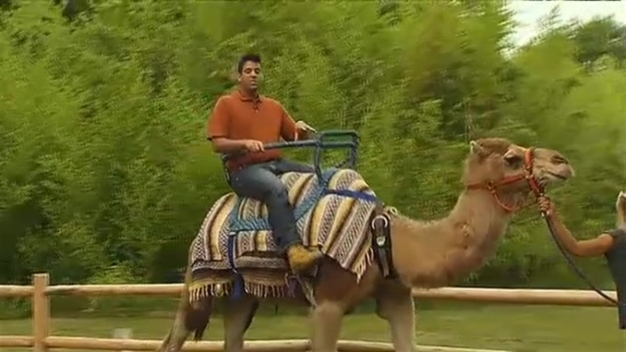 WATCH: Matt Noyes Rides a Camel
