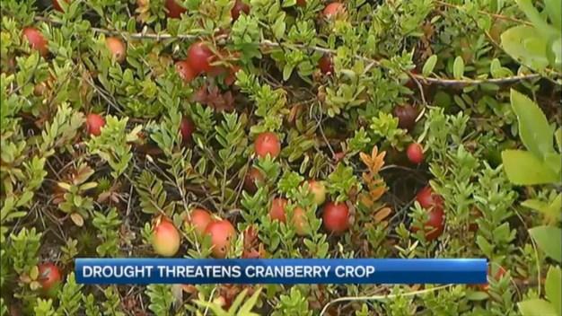Drought Threatens Cranberry Crop
