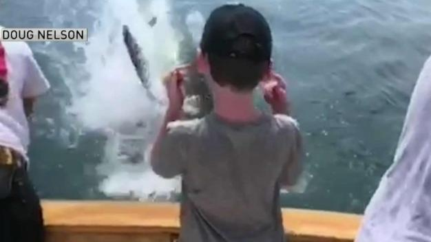 VIDEO: Shark Leaps From Water Feet From Group's Boat