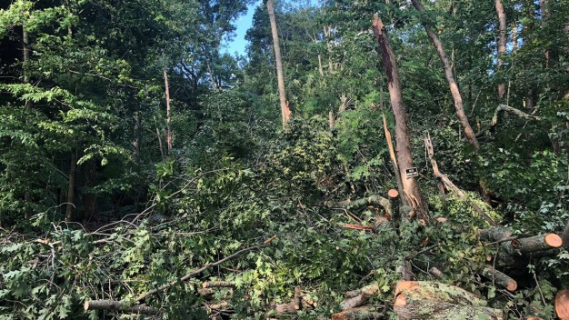 Ashford Continues Cleanup After Tornado