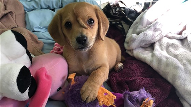 'Unicorn' Puppy With 2nd Tail on His Face Rescued by Shelter