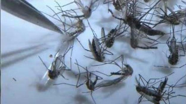 EEE Virus Found in Mosquito for First Time in 2018