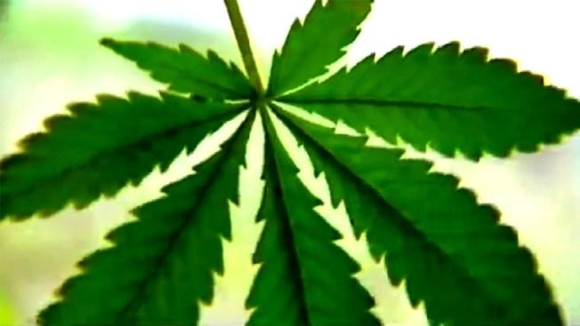 Vermont Lawmakers Gauging Public Interest in Marijuana