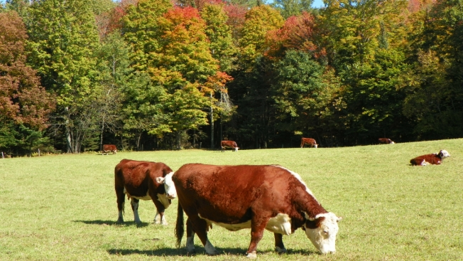 Fall Foliage: Where To Go Leaf Peeping in New England