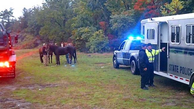 State Police Give Hitchhiking Horses a Lift