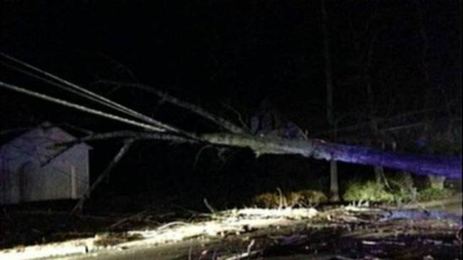 Power Restored After Fallen Tree Causes Major Outages
