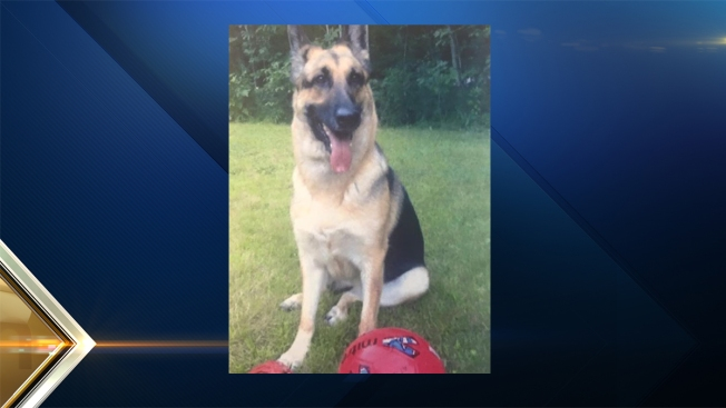 Service Dog Killed by Hit-and-Run Driver
