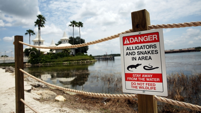 Firefighters Warned Not to Feed Gators Near Disney: Emails