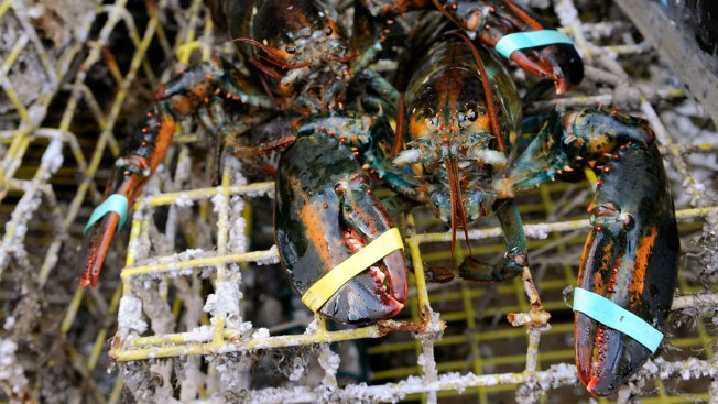 Maine Lobsterman Caught More Lobster Traps Than Allowed