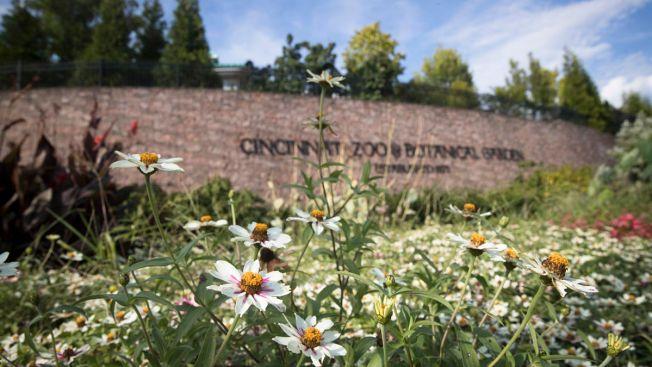 Man Stabbed During Fight at Cincinnati Zoo