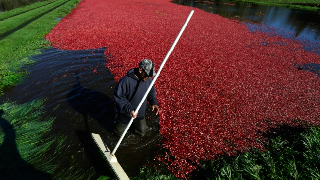 Mass. Invests Nearly $1 Million to Improve Cranberry Bogs