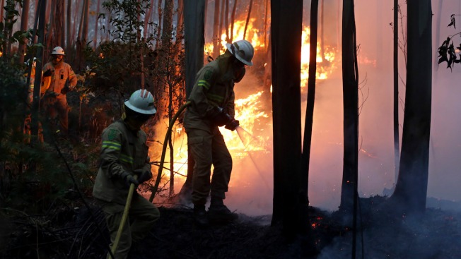 Portugal Forest Fire Kills 62; Police Search for More Bodies