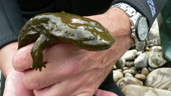 Watch Out for Frogs, Salamanders on Road: Mass. Wildlife Officials