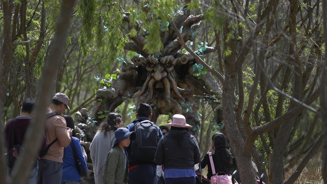 Groots, Ents Lure Youth to Explore Peruvian Wetland