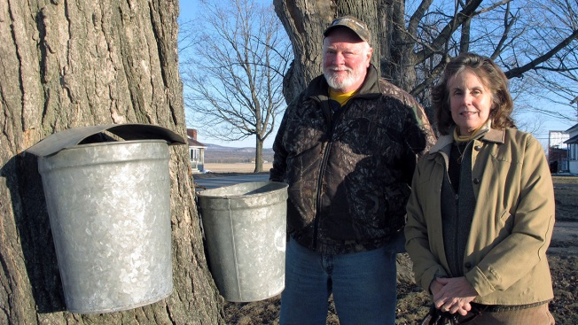 Sticky Fingers: Syrup Maker Says 140 Sap Buckets Were Stolen