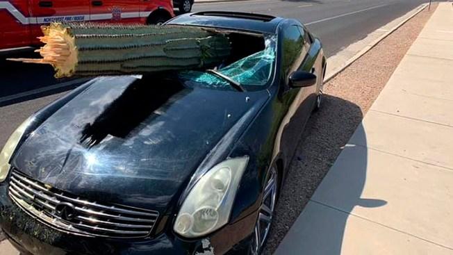 Driver Escapes Injury When Saguaro Cactus Pierces Windshield