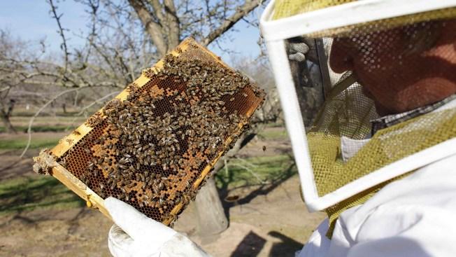 Survey Sees Biggest US Honeybee Winter Die-Off Yet