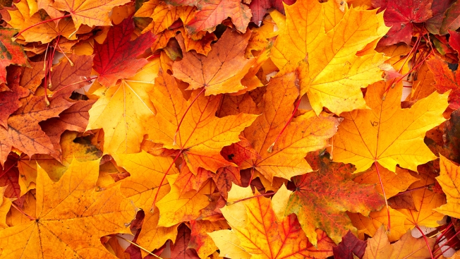 University of New Hampshire Researcher Says Weather Points to Vibrant Fall Colors