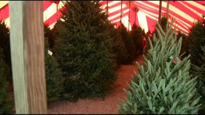Despite Shortages Elsewhere, Vermont Christmas Tree Growers Say ...