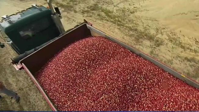 Cranberry Growers Want to Destroy Crops to Prop Up Prices