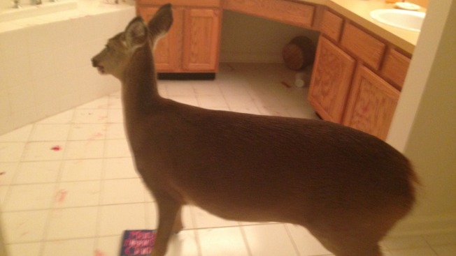 Deer Crashes Through Front Doors, Wrecks Home