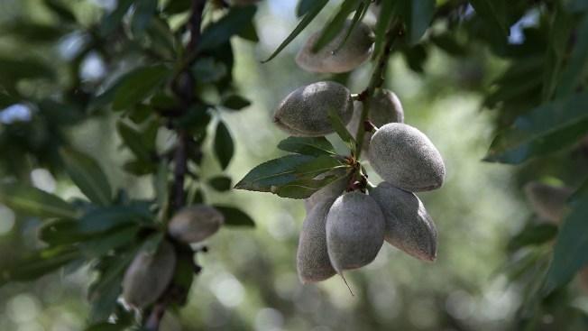 India Tariffs Threaten California Almond Industry