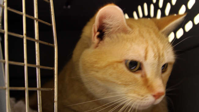 Humane Society Offers Black Friday Deal on Cat Adoption Fees