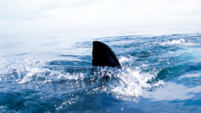 Shark Sighting Closes Cape Cod Beach