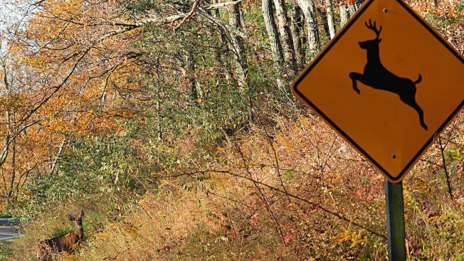 Vermont Reminds Hunters of Rules on Deer, Elk Importation