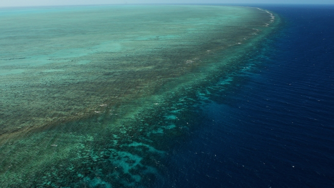 Scope of Great Barrier Reef's Coral Bleaching Alarms Scientists