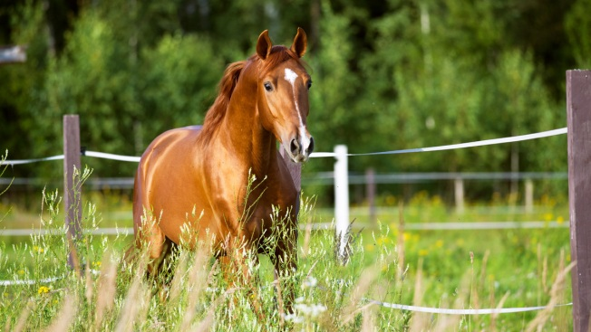 Former Rhode Island Lawmaker Charged with Mistreating Horse