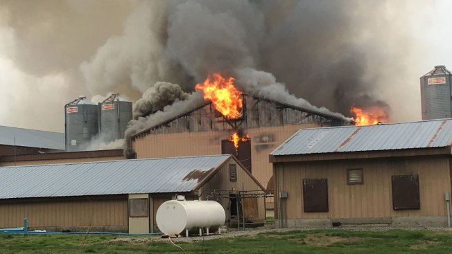 Overheated Motor Caused Fire That Killed 80K Chickens