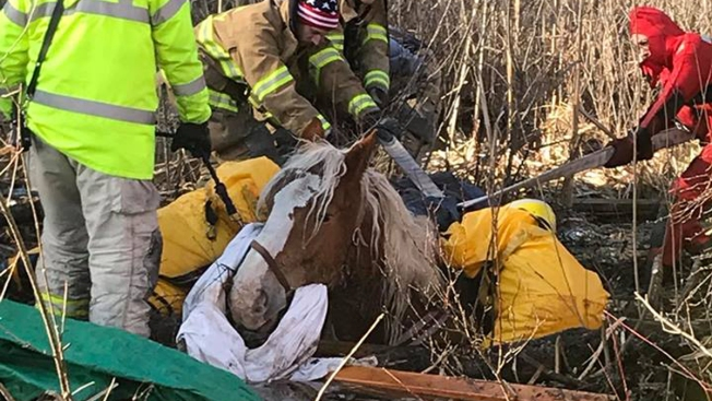 Horse Dies After Becoming Stuck in Mud