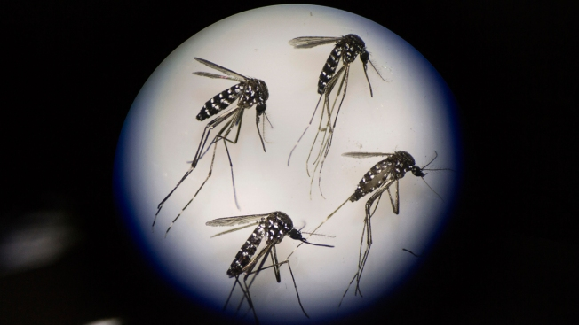 Researchers Seek Volunteers to be Infected With Zika As Part of Research For Cure