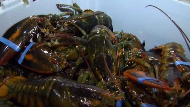 Industry Experts Expect High Lobster Prices to Drop as Summer Approaches