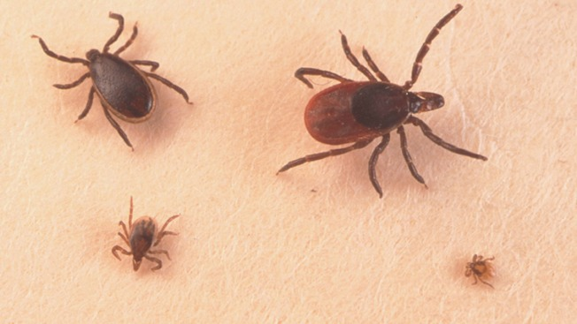 Vermont in for Another Big Lyme Disease Season
