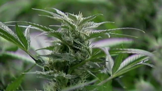 Lawmakers Resume Talks on Compromise Marijuana Bill
