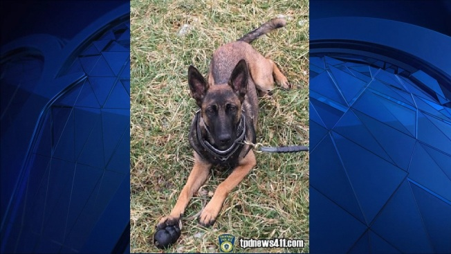 Officer, K-9 Companion Stop Robbery in Dorchester